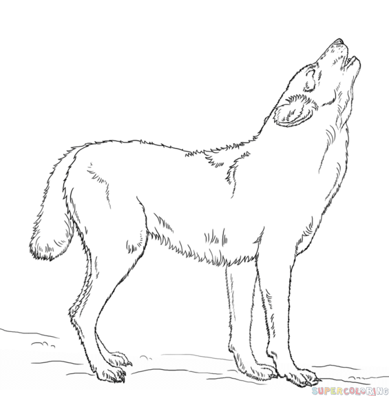 How to draw a howling wolf step