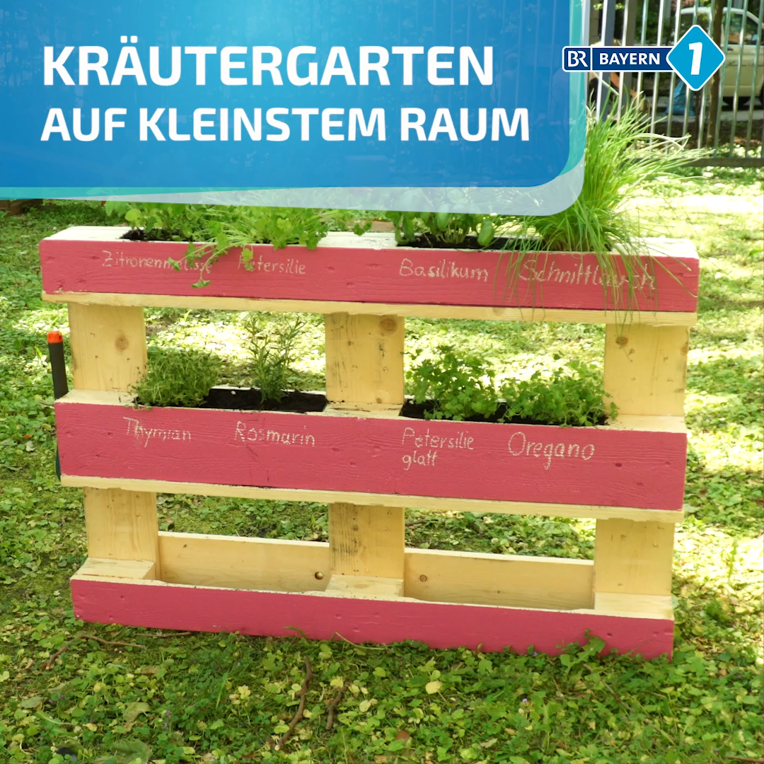 Photo of Kräuter anpflanzen in Palette
