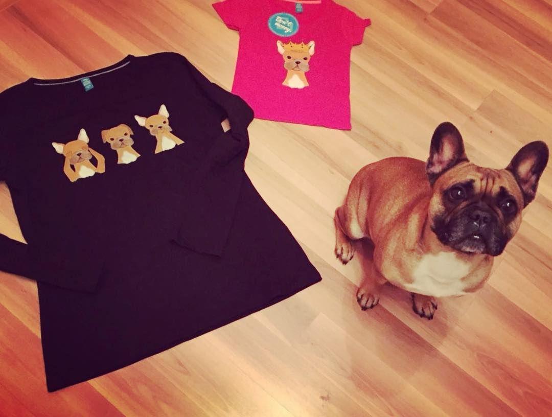Zufriedene Kunden Besucht Luna Hat Die Qualitatskontrolle Durchgefuhrt Frenchie Frenchbulldog Franzo Franzosischebulldogge Franzosische Bulldogge Luna