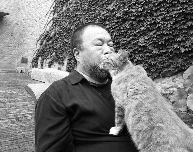 gato Ai wei wei