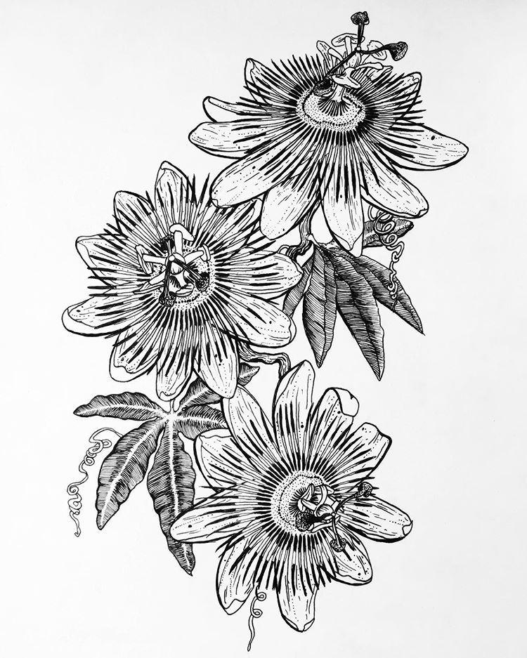 Passiflora Caerulea Drawing Draw Passiflora Passifloracaerulea Flowers Tattoo Flowertattoo Passiflore Passiflora Caerulea Flower Sketches Drawings