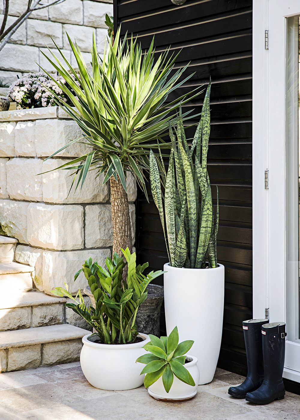 Flower Pot Ideas Outdoor Plants