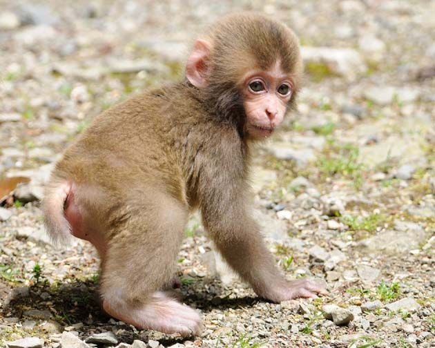 猿の赤ちゃん Monky Baby Osaka Japan