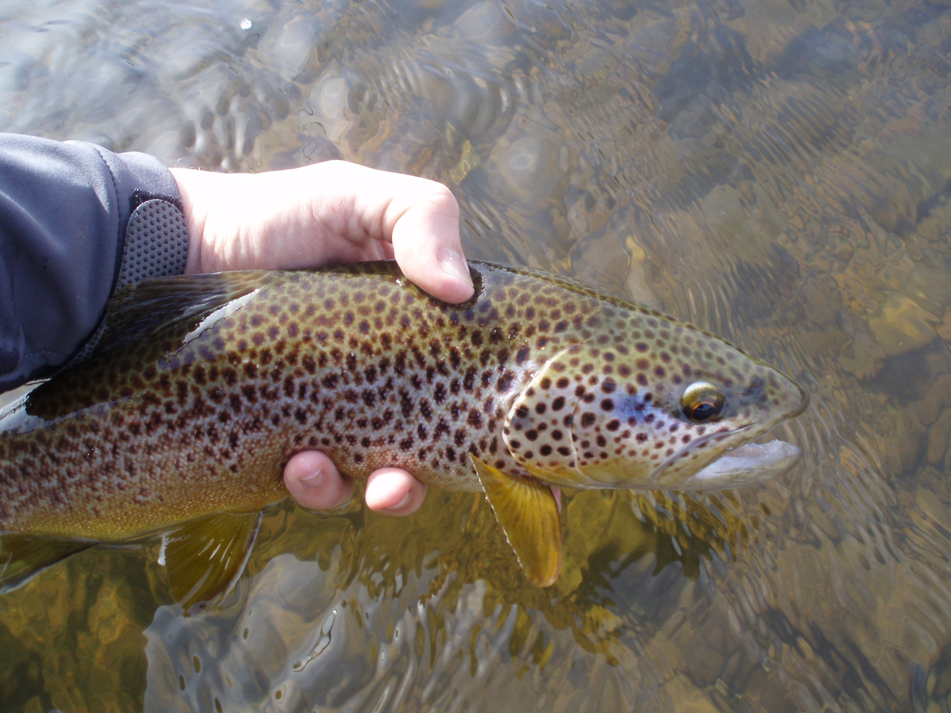 Pin On Trout Rivers In The Uk