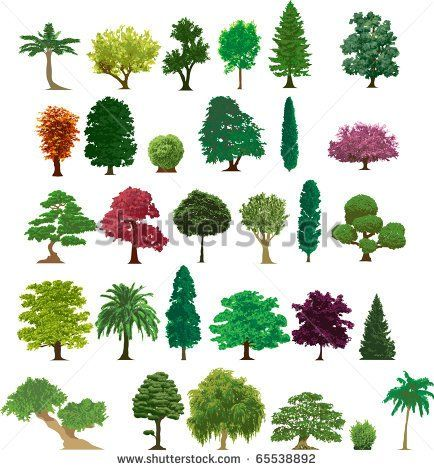 Different Kinds Of Trees With Names