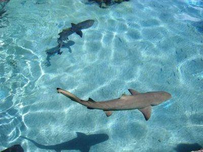 Cute Small Baby Sharks Small Shark Shark Fishing Shark Photos