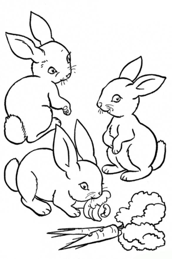 ausmalbilder kaninchen …   Pinteres…