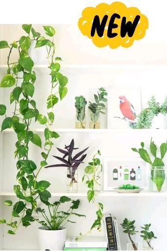 Plant decoration style one tips #decorhome #plantdecor