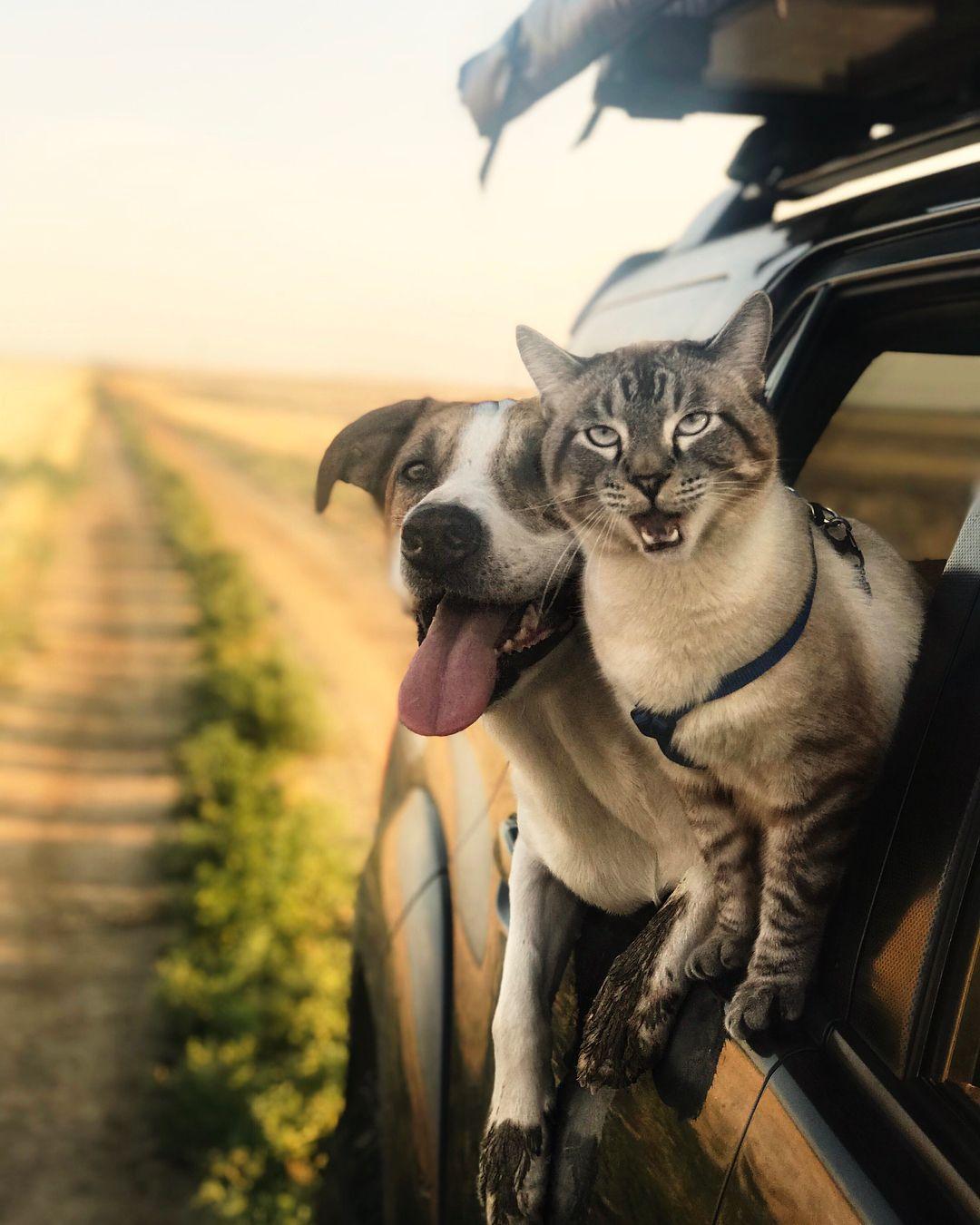 Amazing Dog and Cat Travel Companions Zwierzęta, Kocham