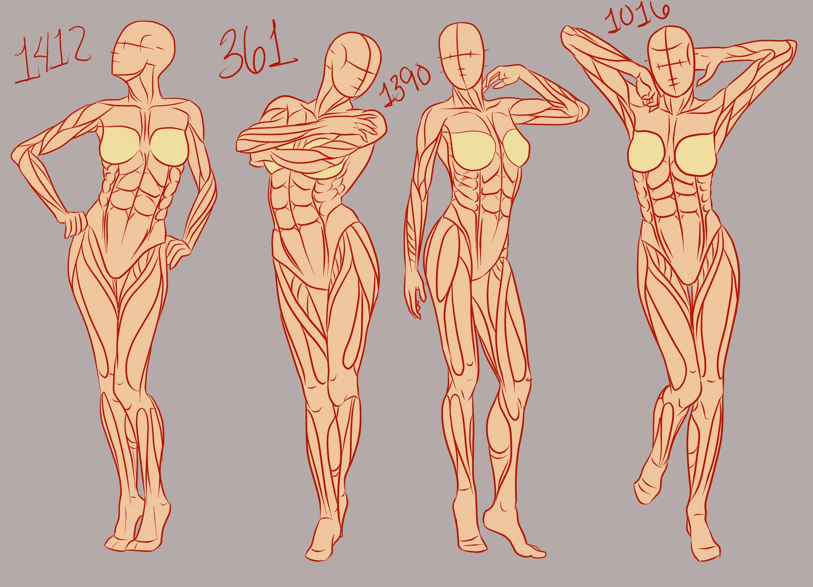 Female Poses Muscles Drawing Reference Art Inspiration