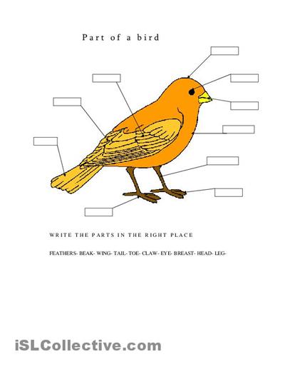 parts of a bird printable
