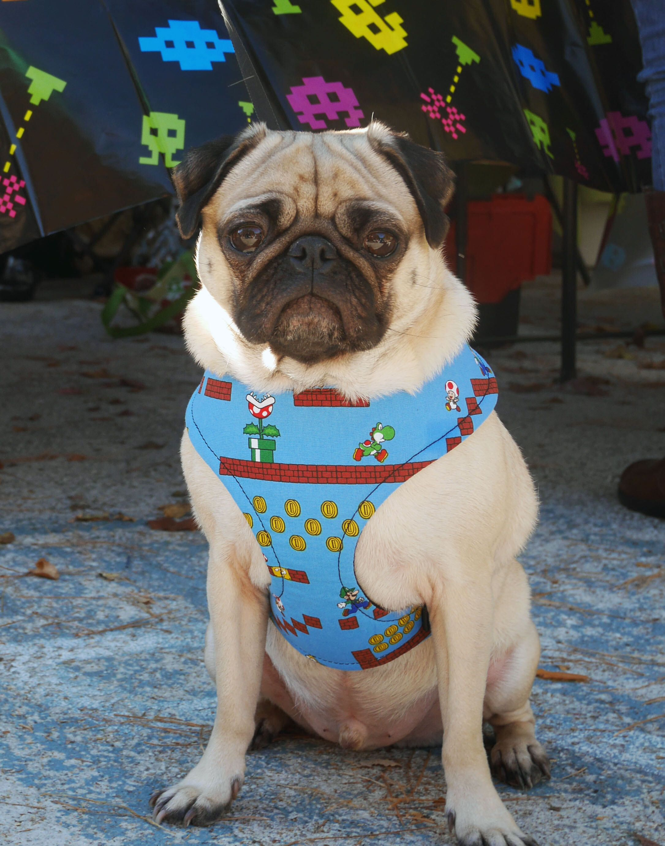 Retro Gamer Dog Harness A Blue 8 Bit Geek Chic Throwback To The