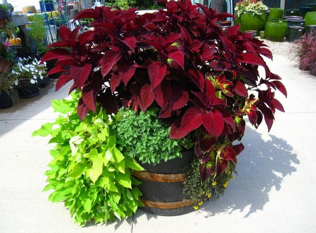 Container Garden Recipes For Full Sun Ideas Flowers