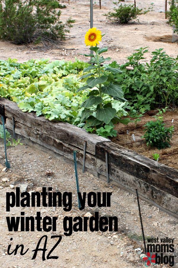 Brighten The Season With Winter Garden Ve ables