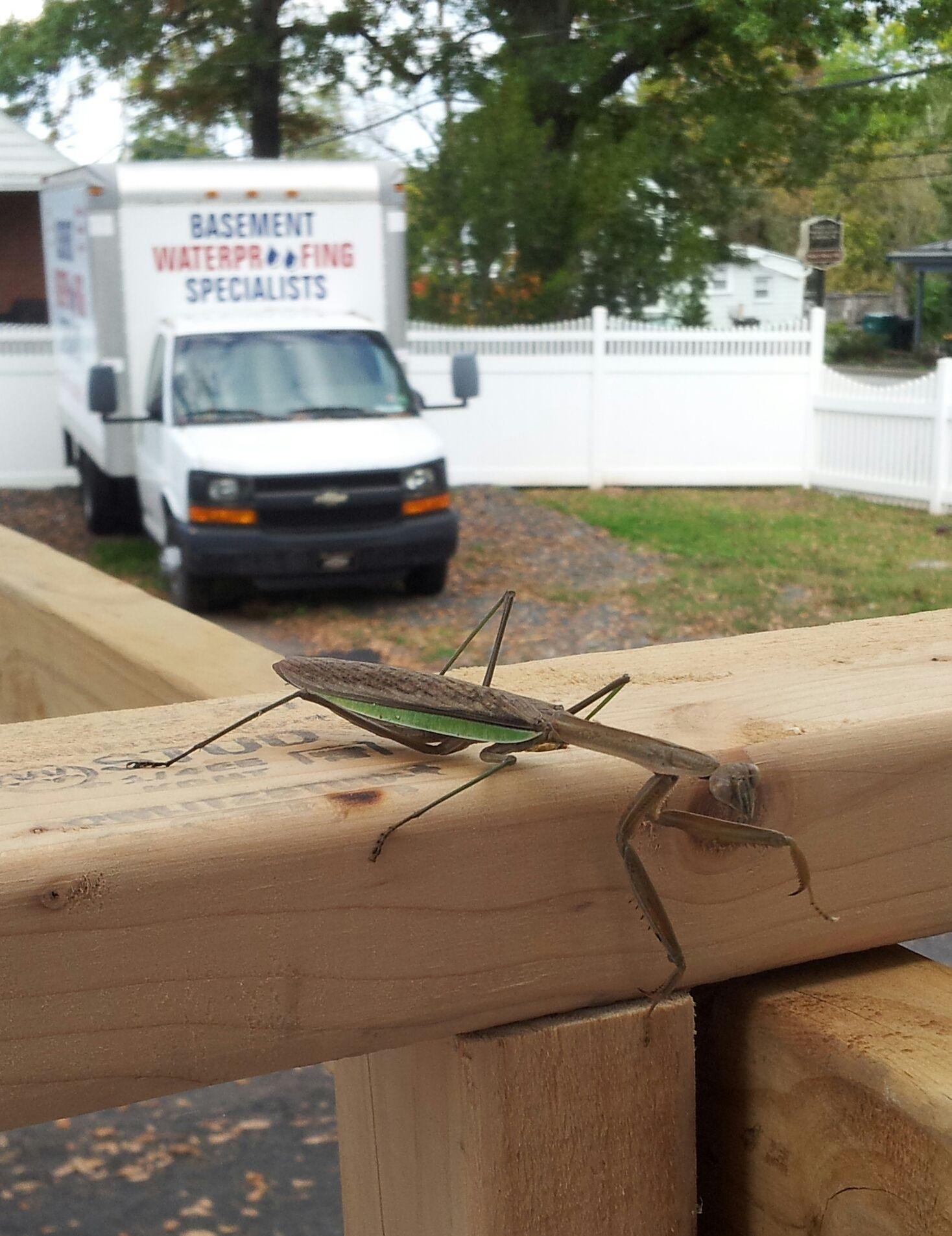 A Praying Mantis Outside Our Work! Basement WaterproofingPraying Mantis