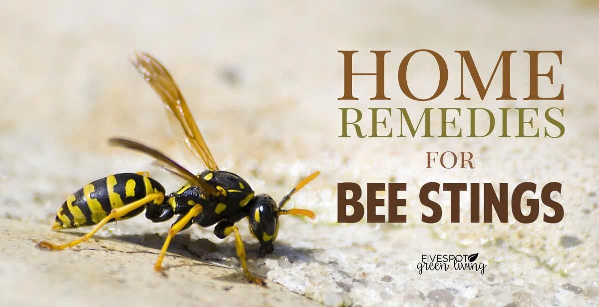 The Basics of Pest Control Wasp stings, Wasp nest