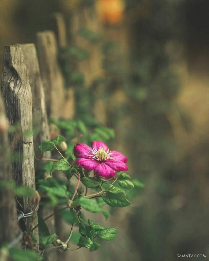 عکس پروفایل شاخ دخترونه بدون متن عکس پروفایل دخترونه لاکچری بدون متن Flowers Photography Wallpaper Beautiful Nature Wallpaper Valley Of Flowers Red flower field anime holding kite