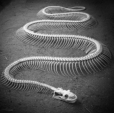 snake skeleton for a drawing sketchbook project ideas