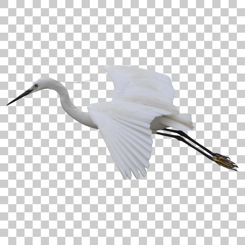 Crane Stork Bird Png Image With Transparent Background Png Images Bird Transparent Background