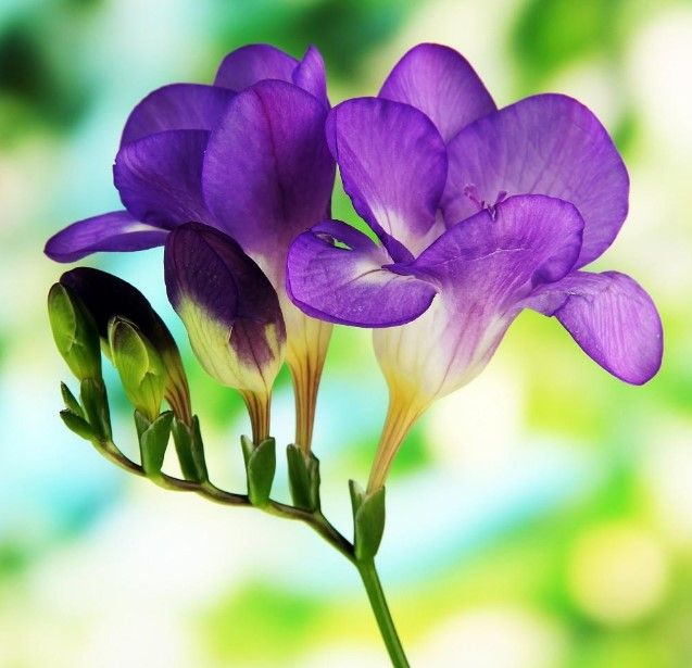 34 Different Types Of Purple Flowers For Your Garden Flowers