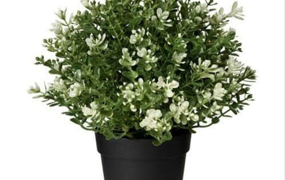 Gambar Bunga Di Dalam Pot Ikea Fejka Bunga Rumput Tiruan Dalam Pot 10cm 1pc Download Tanaman Bunga Dalam Pot Kecil Downlo Di 2020 Bunga Menanam Bunga Pot Tanam