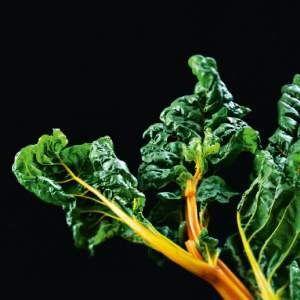 Pehmeä mangoldikeitto - Reseptit – Kotiliesi