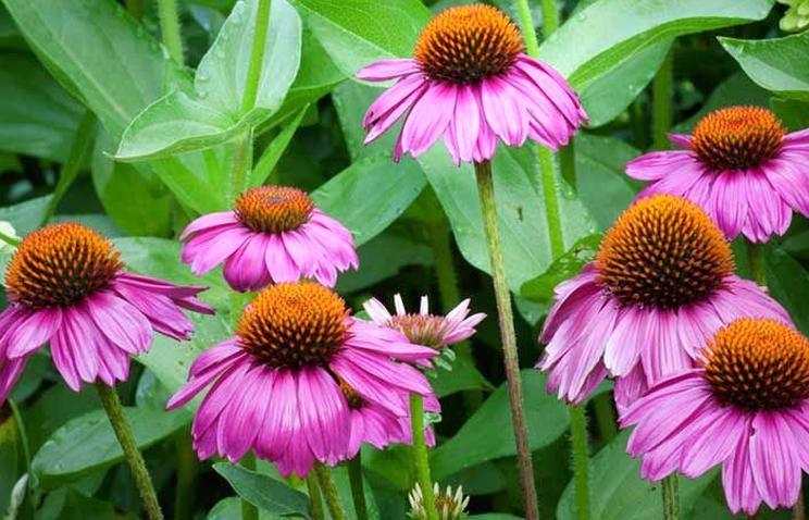 15 Perennials that Grow in Zone 4 - Garden Lovers Club in ...