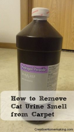 How To Remove Cat Urine Smell From Carpet Find Out Here Http