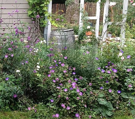14 Lieblinge Die Einen Cottage Garten Zaubern Ohne Arbeit Cottage Garten Garten Pflegeleichter Garten