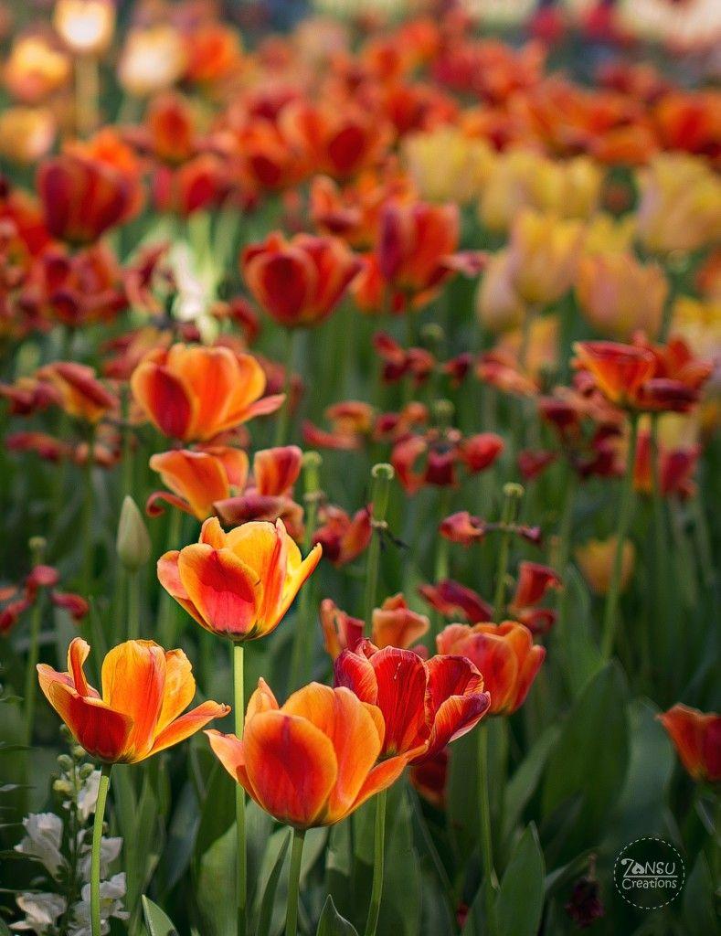 Descanso Garden Flowers