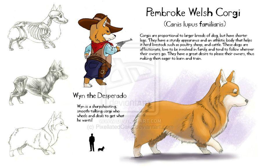 Pembroke Welsh Corgi by *PixellatedCake on deviantART #corgi