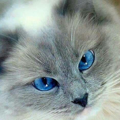 Pin By Tejasvi On Cats Beautiful Cats Cute Cats Cute Animals