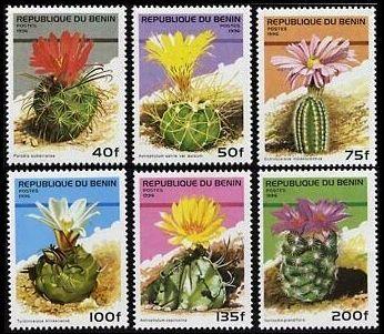 Epingle Par Ingrida V Sur Cacti And Succulents Love Avec Images