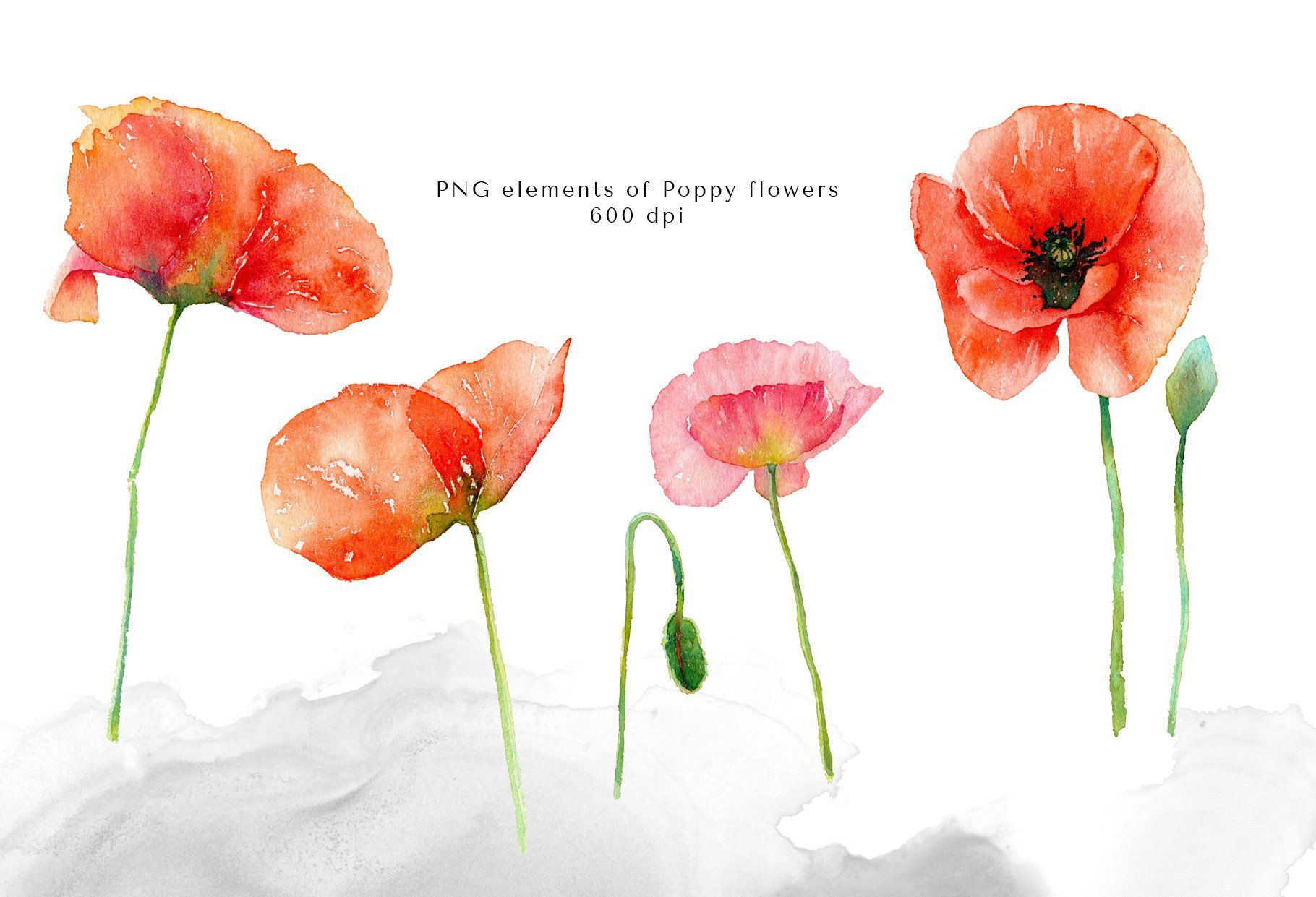 9 Red Poppies Illustations Made With Watercolors Part Of The