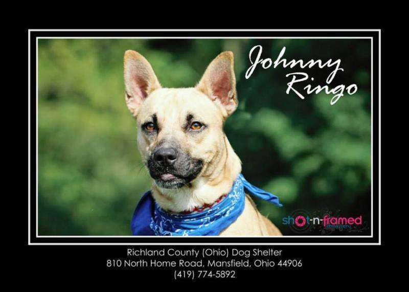 Adopt johnny ringo aka roscoe urgent on shelter dogs