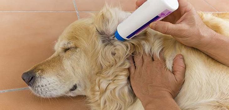 Ear wash for dogs homemade and natural solutions dog