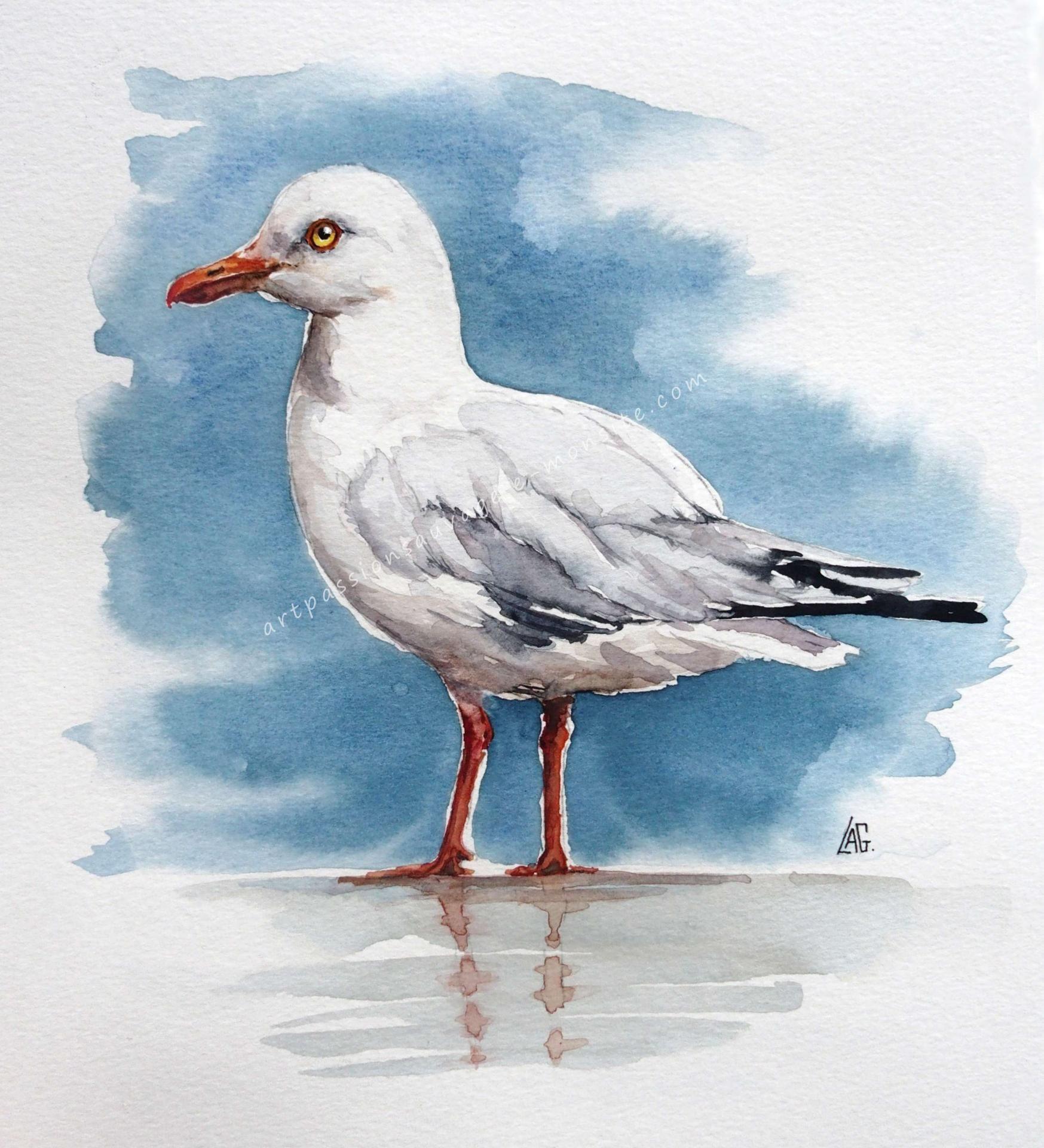 Mouette Ou Goeland Oiseau En Aquarelle Peinture Oiseau