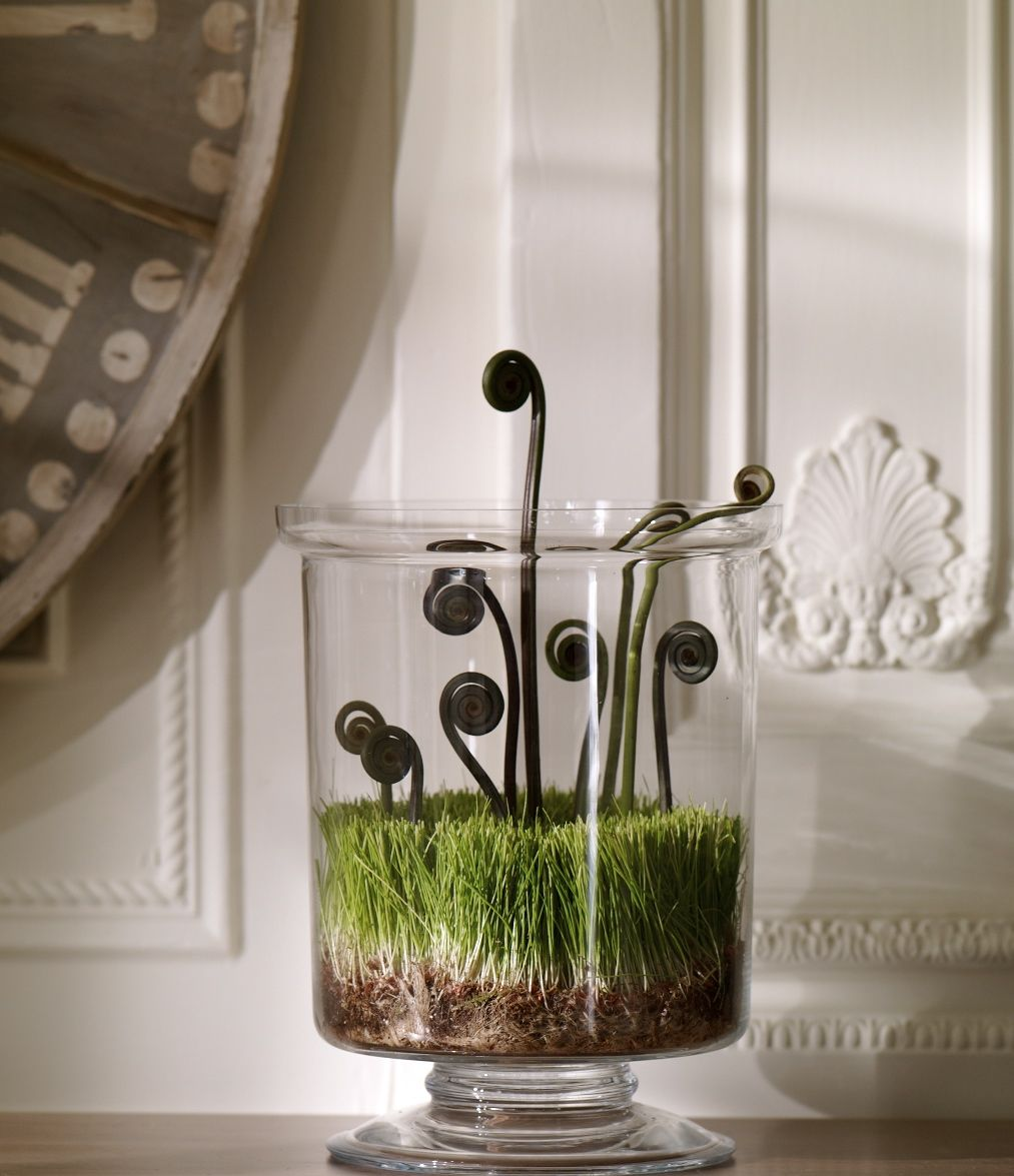 Happy Spring! Fiddleheads in Ethan Allen Hurricane. #flowers #vase #grass #curly #plant