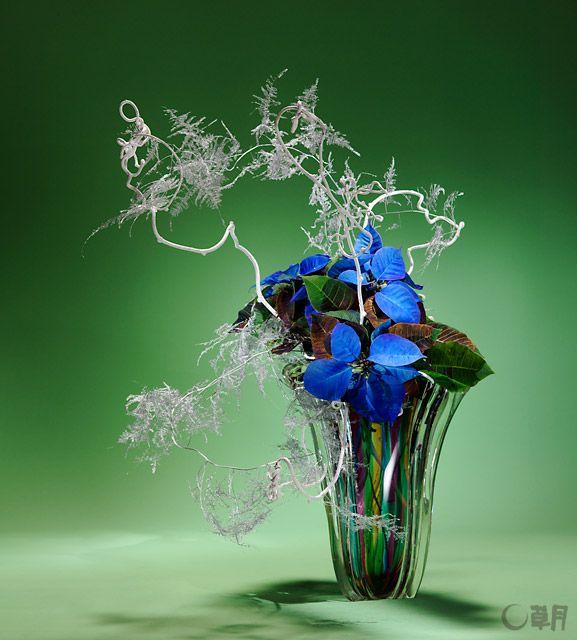 鮮やかなロイヤルブルーのポインセチアに魅せられて、聖夜をイメージしていけました。踊るようなアスパラガス・プルモーサスとキウイづるの線の動きが空間に広がりをもたらします。花材:ポインセチア、着色アスパラガス・プルモーサス、着色キウイづる 花器:ガラス花器 This work was arranged reflecting the image of Christmas Eve, fascinated by poinsettia with a bright royal blue color. The movements of asparagus plumosus and kiwi fruit vines, as if they were dancing, expanded the space. Materials:Poinsettia, Colored asparagus plumosus, Colored kiwi fruit vine Container:Glass vase
