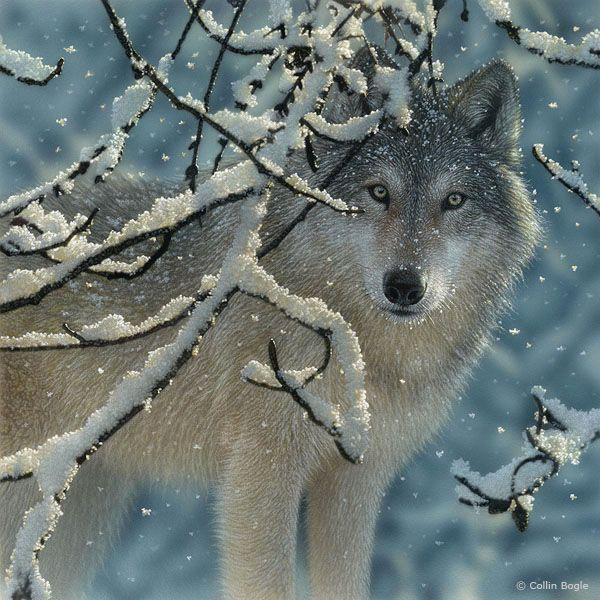 Lobo en la nieve   Arte.Pintura   Lobos salvajes, Lobos y ...