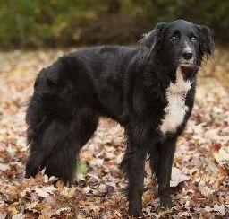 Petfinder  Adoptable   Dog   Border Collie   Potomac, MD   Jamie