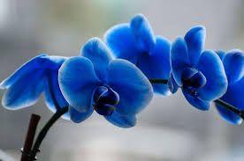 orquideas raras - Pesquisa Google