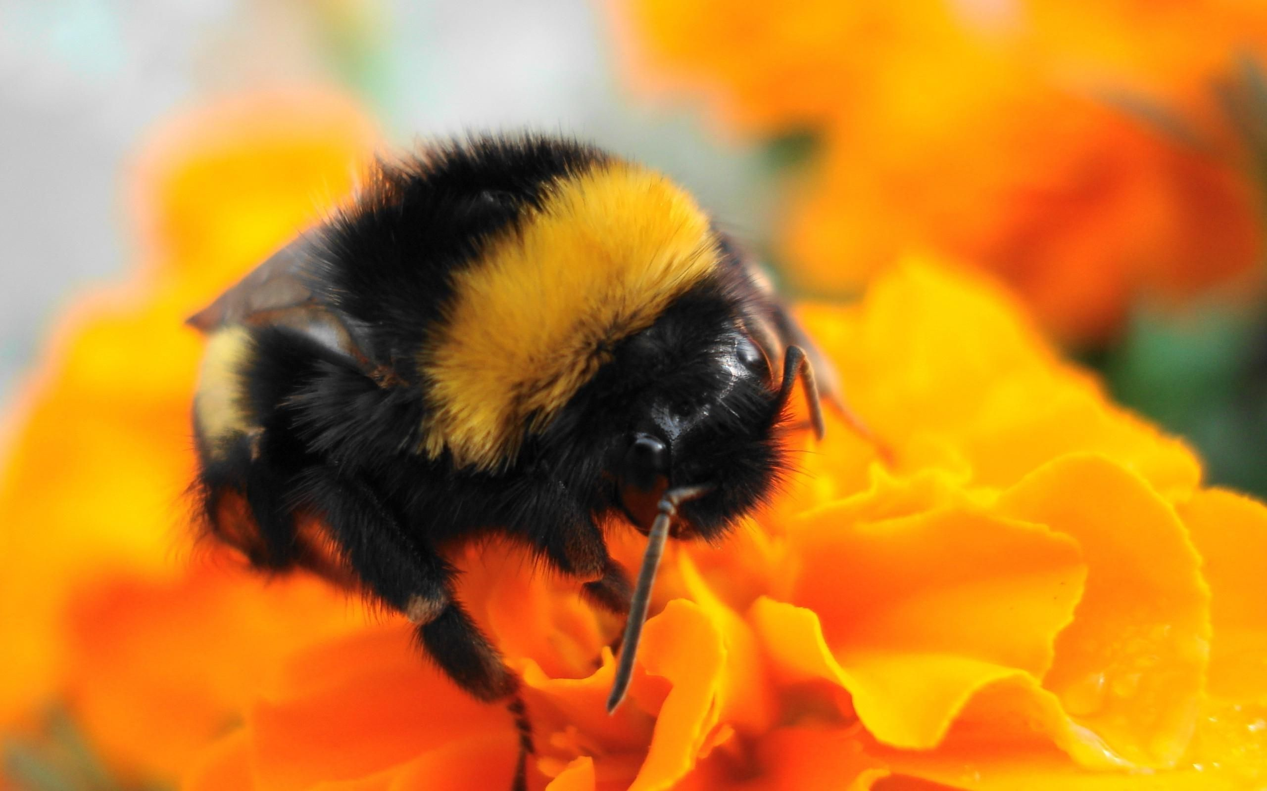 Honey Bees On Flowers Wallpaper