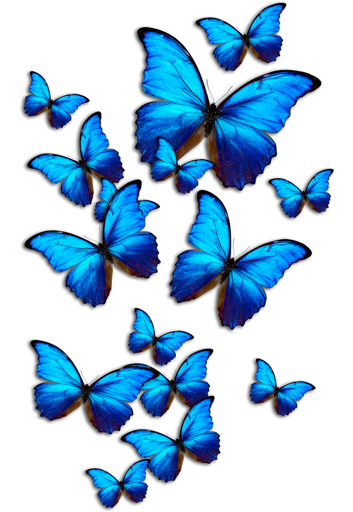 Blue Butterflies All Over Graphic Tee By Artysmedia Medium Blue Butterfly Wallpaper Blue Butterfly Butterfly Wallpaper
