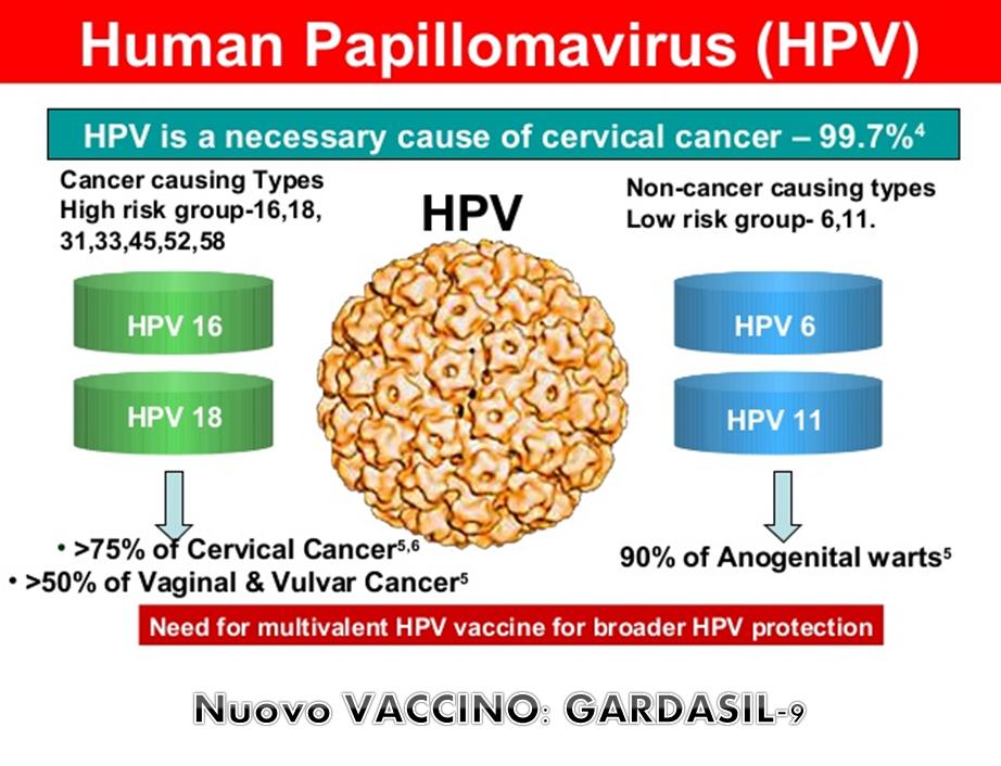 anti papillomavirus 9