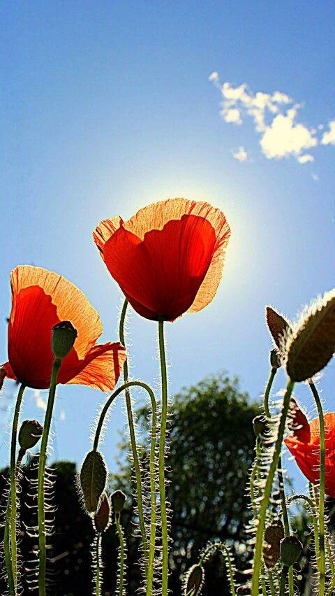 Bright Poppy.