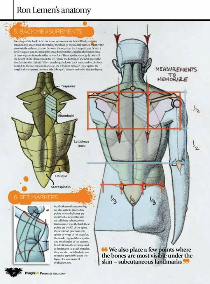 Pin by Tihomir Nyagolov on Anatomy - Human   Pinterest   Anatomy ...