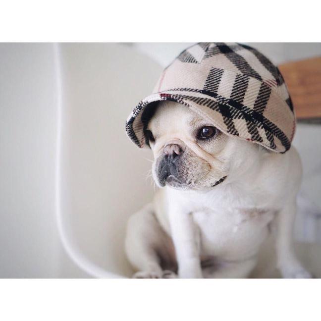 piggyandpolly on #instagram