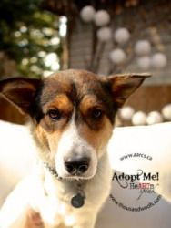 Jonny is an adoptable Shepherd Dog in Calgary, AB  When