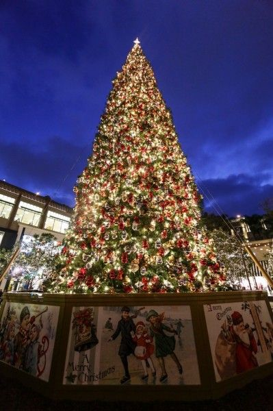 Experience Snow In Los Angeles Christmas Tree Christmas Tree Lighting Christmas Lights